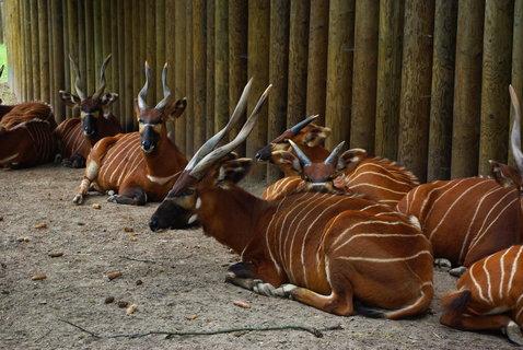FOTKA - Antilopy .