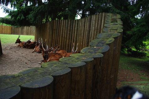FOTKA - Antilopy ...