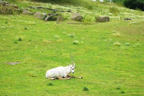 FOTKA - Antilopy ....