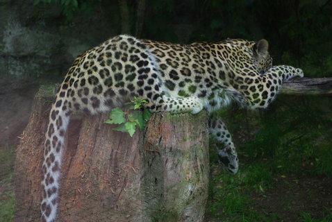 FOTKA - Gepard .