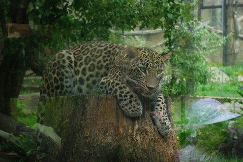 FOTKA - Gepard ..
