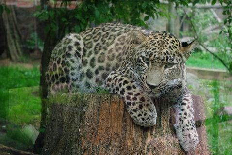 FOTKA - Gepard ...