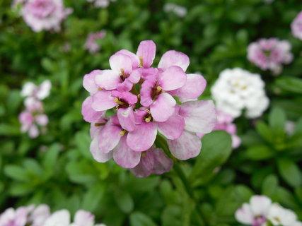 FOTKA - z jarní přírody