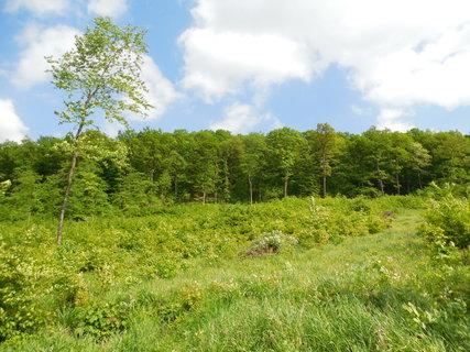 FOTKA - jarním lesem....klíšťata si nesem...
