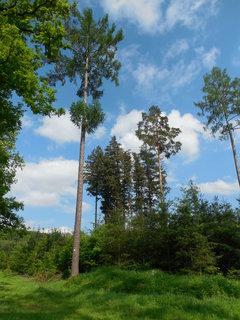 FOTKA - jarním lesem....   ..