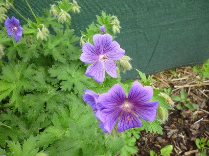 FOTKA - Květiny 5