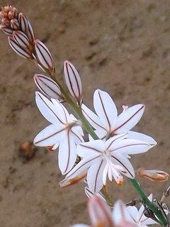 FOTKA - asi plevel-Španělsko
