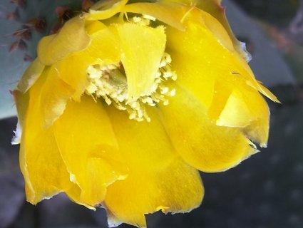 FOTKA - žlutý květ
