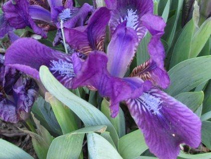 FOTKA - květy kytek 2