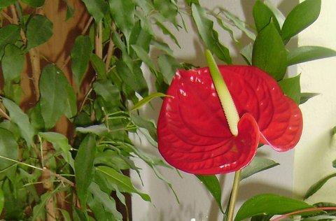 FOTKA - květy kytek 8