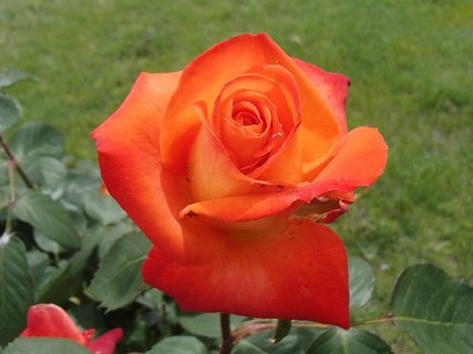 FOTKA - oranžová kráska