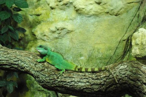 FOTKA - Chameleon