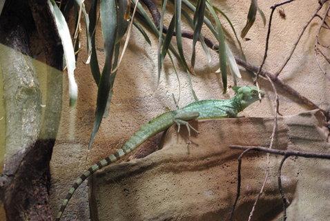 FOTKA - Chameleon .