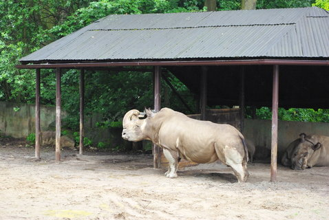 FOTKA - Nosorožci