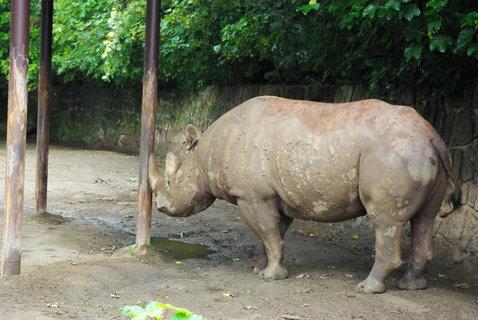 FOTKA - Nosorožci .....