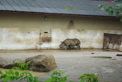 FOTKA - Nosorožci ......