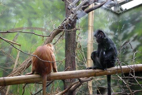 FOTKA - Opice .