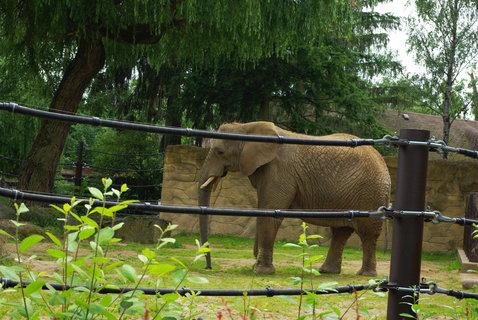 FOTKA - Slon africký
