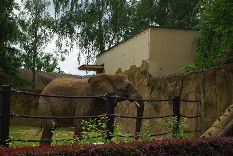 FOTKA - Slon africký .