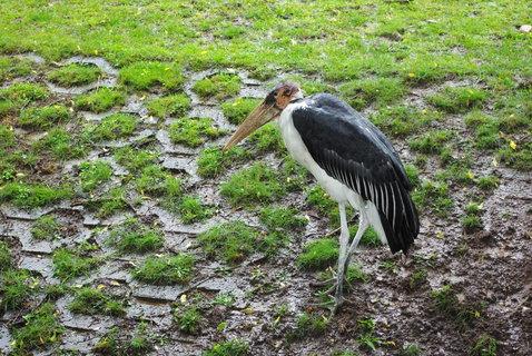 FOTKA - Vodní ptactvo .