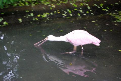 FOTKA - Vodní ptactvo ....