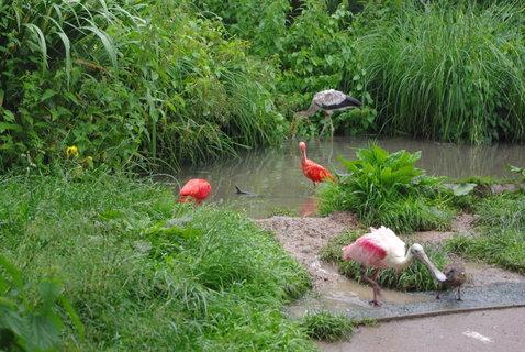 FOTKA - Vodní ptactvo .......