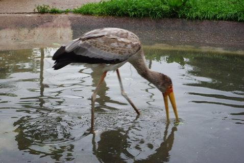 FOTKA - Vodní ptactvo ........
