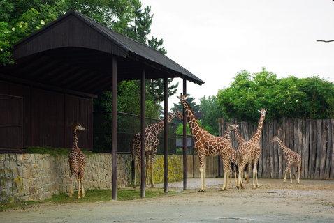 FOTKA - Žirafy .....