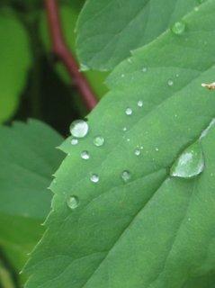 FOTKA - kapky na listech