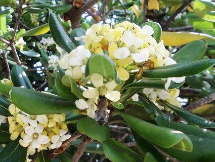 FOTKA - Kvetly ve Španělsku ..