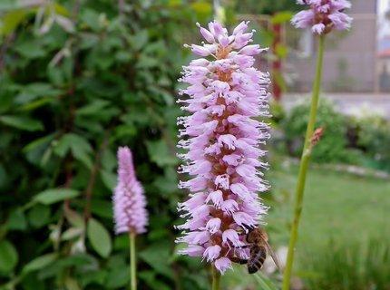FOTKA - Ochutnávka bahenní květinky