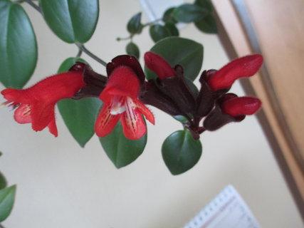 FOTKA - květy kytek 13
