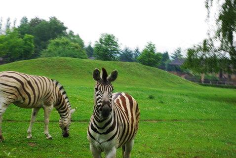 FOTKA - Safari
