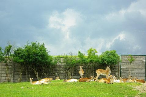 FOTKA - Safari -....