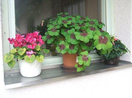 FOTKA - Kytky na okně garáže 1