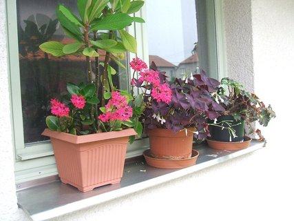 FOTKA - Kytky na okně garáže 2