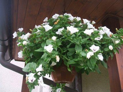 FOTKA - Plno květů