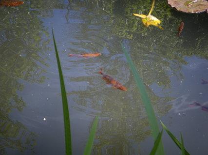 FOTKA - Ryby, ryby, ryby...22
