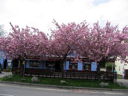 FOTKA - Letňany  v květnu 10