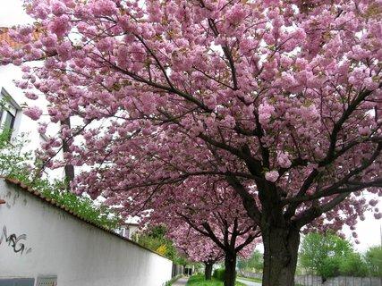 FOTKA - Letňany  v květnu 13