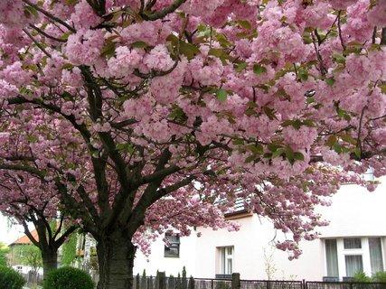 FOTKA - Letňany  v květnu 9