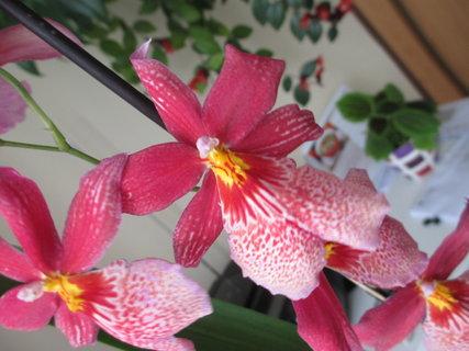 FOTKA - v květináči 12