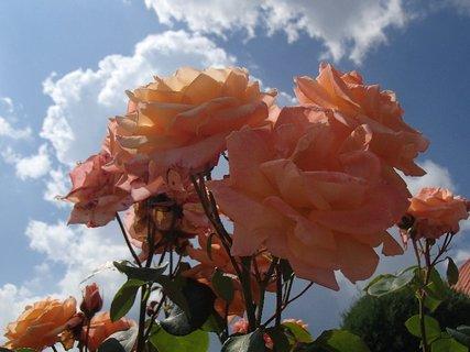 FOTKA - oranžové v oblakoch
