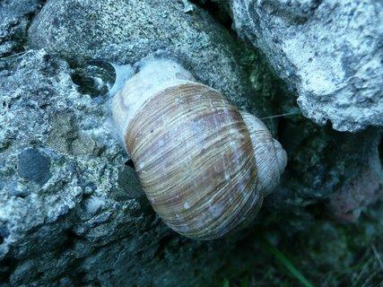 FOTKA - Šnek na kameni