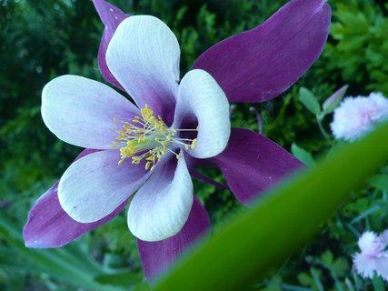 FOTKA - Kráska v zahradě 1