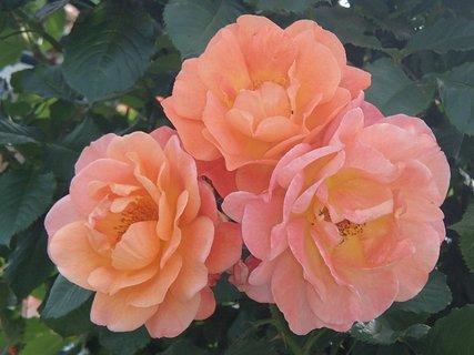 FOTKA - tri oranžové