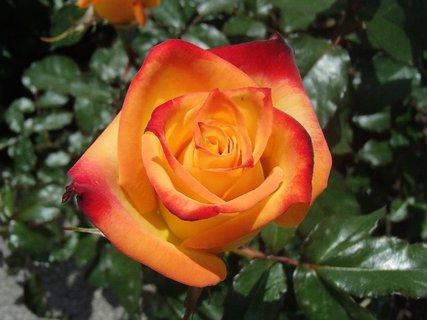 FOTKA - má peknú farbu