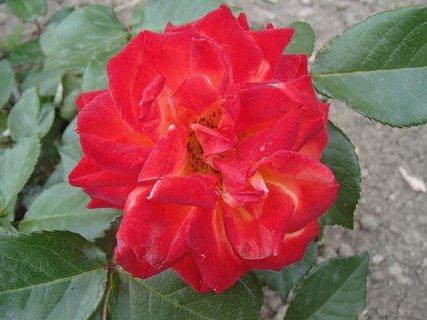 FOTKA - zo spodu má žlté lupene
