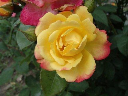 FOTKA - má ružové okraje
