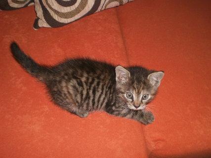 FOTKA - Mourek - koťátko 1